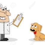 Come comportarsi quando il nostro cane ha bisogno dell'intervento del veterinario