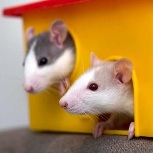 Alimenti, Integratori e Accessori per Piccoli Animali