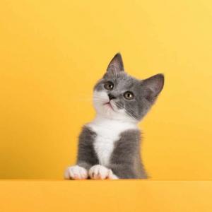 Alimenti, Integratori e Accessori per Gatti